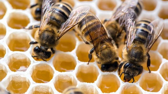 #WieLeben: Bienen-Künstler*innen im Gespräch