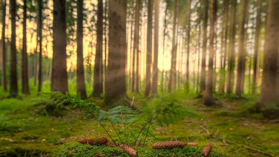 Natur und Erlösung
